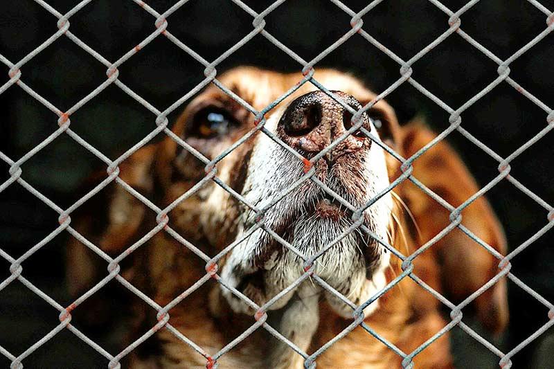 Missstände in der Tierhaltung gesehen – was tun?