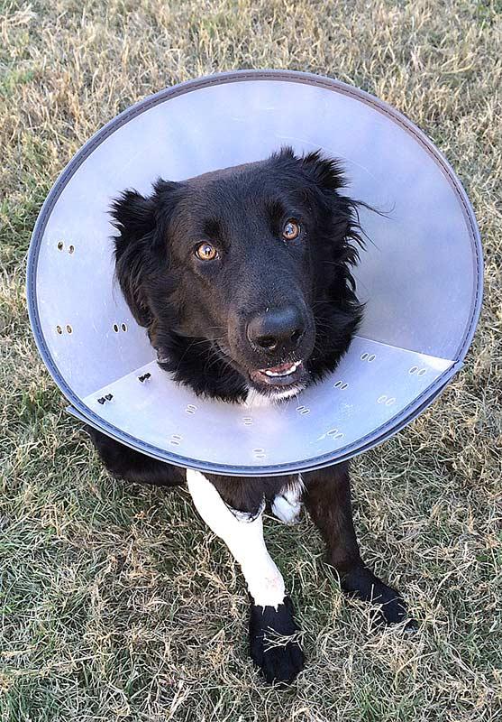 Im Gegensatz zu Herrchen und Frauchen haben viele Hunde und Katzen keine Krankenversicherung
