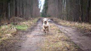Es ist Brutzeit: Hunde bitte an die Leine! VIER PFOTEN bittet Hundehalter um Rücksichtnahme.
