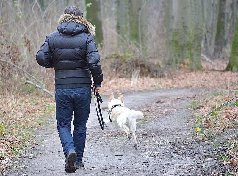 Gesund mit Hund: Wer eine starke Bindung zu seinem Tier hat und regelmäßig Zeit an der frischen Luft verbringt, verringert sein Risiko für Herz-Kreislauf-Erkrankungen deutlich.