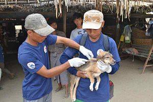 VIER PFOTEN impft über 58.000 Hunde und Katzen in Myanmar (© FOUR PAWS, Mahdi Quatrameez)