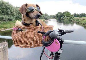 Fahrradtour: Kleine Hunde können ins Körbchen