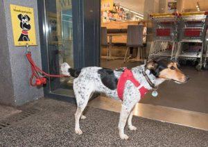 Lassen Sie Ihren Hund nicht unbeaufsichtigt vor Geschäften (Foto: © VIER PFOTEN, Tibor Rauch)