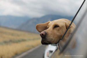 Wer mit Hund oder Katze verreisen will, sollte sein Tier gut vor Parasiten schützen – denn diese können bedrohliche Krankheiten übertragen (Foto: ESCCAP | unsplash, Emerson Peters)