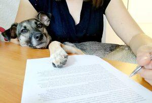 Bürohunde tragen zu einem entspannten Betriebsklima, gesünderen Mitarbeitern und einer hohen Motivation bei (Foto: © TASSO.e.V.).