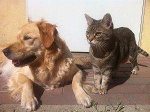 Impfungen bei Hund und Katze schützen von der ersten Lebenswoche bis ins hohe Alter