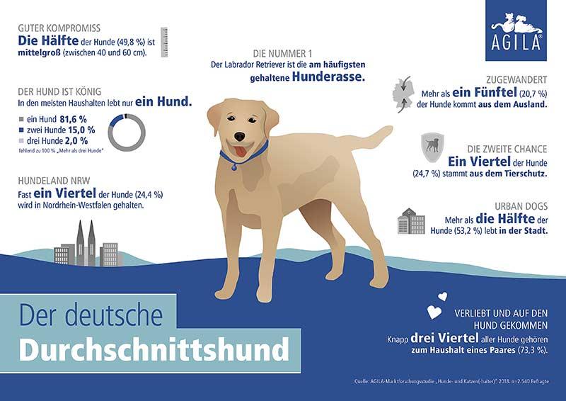 Das ist der deutsche Durchschnittshund: Der Labrador Retriever ist die meistgehaltene Hunderasse (Grafik: © AGILA)