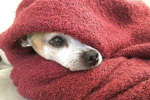 Wärmegewitter sorgen für einen hohen Stresspegel bei ängstlichen Hunden und besorgten Haltern.