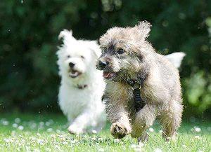 Dogsharing ist eine gute Lösung für Tierfreunde, die sich nicht alleine um einen Hund zu kümmern können.