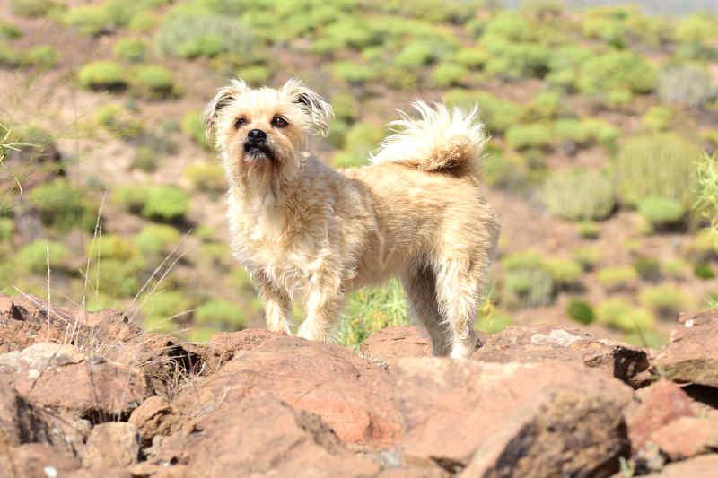 Hunde aus Süd- und Osteuropa können Herzwurmlarven in sich tragen