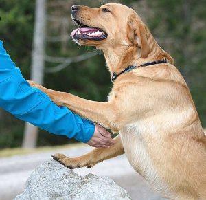 Reha: Welcher Hund darf mit zur Reha? Wie die passende Klinik finden?