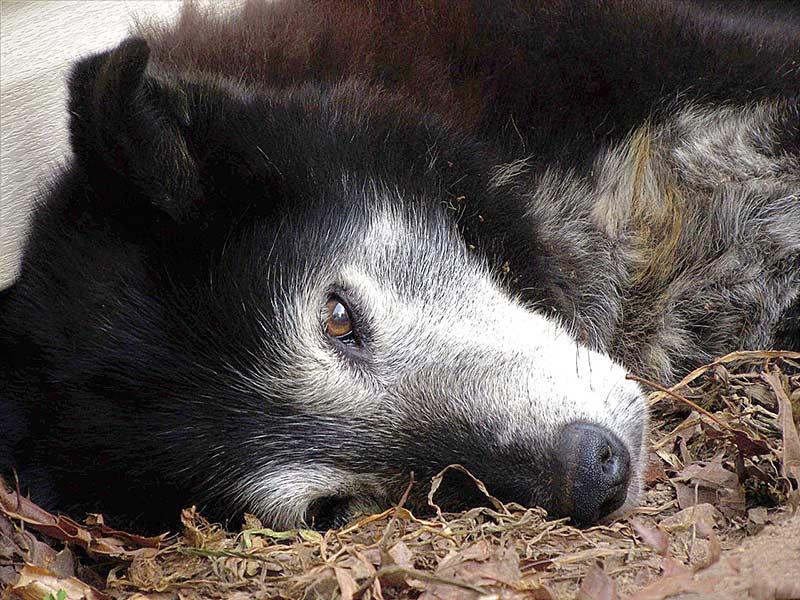 """Alt, krank oder mit einer Narbe auf der Seele: Adoptionsinteressierte Tierfreunde sollten beim nächsten Tierheimbesuch auf die """"besonderen"""" Tiere achten – alle haben eine Chance auf ein schönes Zuhause verdient."""