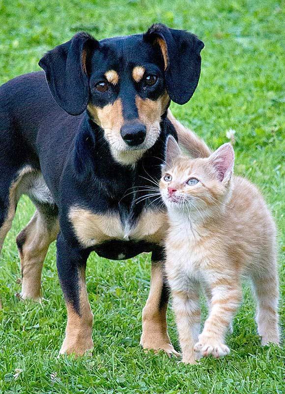 Eine richtige Freundschaft zwischen Hunden und Katzen ist durchaus möglich