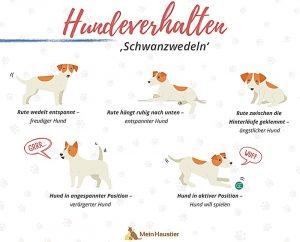 Das Schwanzwedeln von Hunden hat eine wichtige Aussagekraft und ist ein Zeichen der Erregung – egal ob positiv oder negativ (Grafik: UNIQ GmbH).