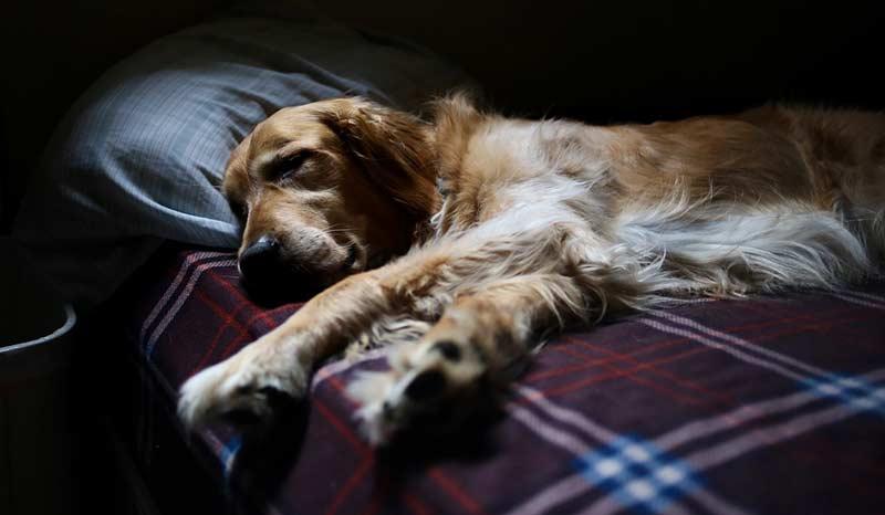 Ein festes Hundebett an einer warmen, zugfreien Stelle unterstützt die Gelenke und erleichtert das Aufstehen.