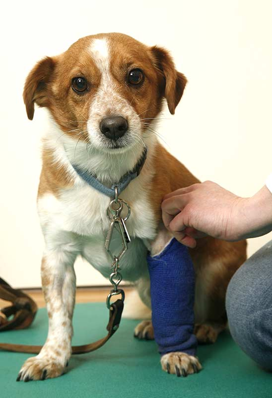 Tierhalter sollten sich das Vorgehen anhand des eigenen Tiers zunächst vom Tierarzt zeigen und erklären zu lassen (Foto: IVH).