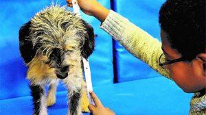 Die Vermessung des Hundes: Auch im Fach Mathematik sind Schulhunde kreativ einsetzbar (Foto: Kynos Verlag).