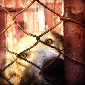 Jedes Jahr werden Zehntausende Hunde in rumänische Tierheime gebracht – die meisten sterben hier (Foto: © PETA Deutschland e.V.)