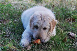 Immer wieder erregen Giftköderfunde die Gemüter - Training mit dem Hund hilft