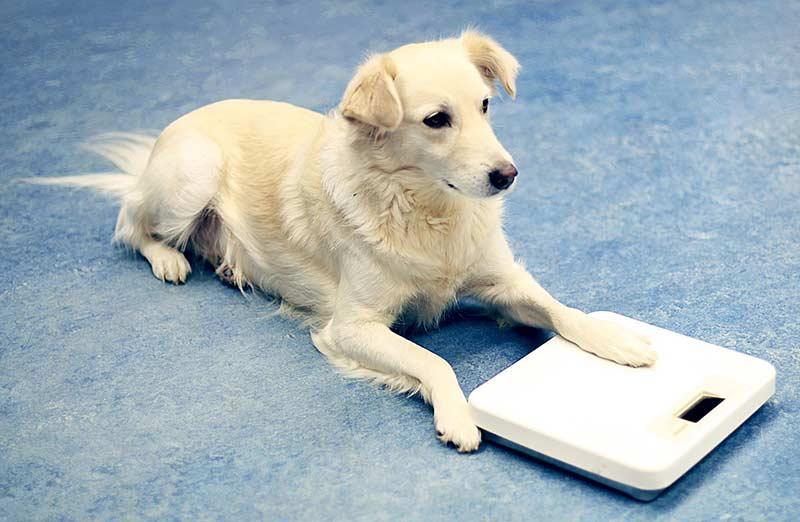 Auch bei Tieren muss auf das Gewicht geachtet werden (Foto: © PETA)