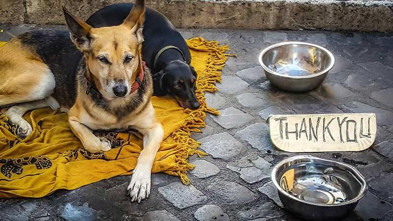 Sozialpartner Hund: Vielen Obdachlosen sind ihre Vierbeiner wichtiger als ein trockener Schlafplatz, wie Aniko Ligeti bei ihrer Untersuchung herausgefunden hat (Foto: pixabay - kirkandmimi)