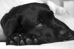 Wie beim Menschen auch, hilft den Tieren bei einer Erkältung viel trinken, Ruhe und Wärme