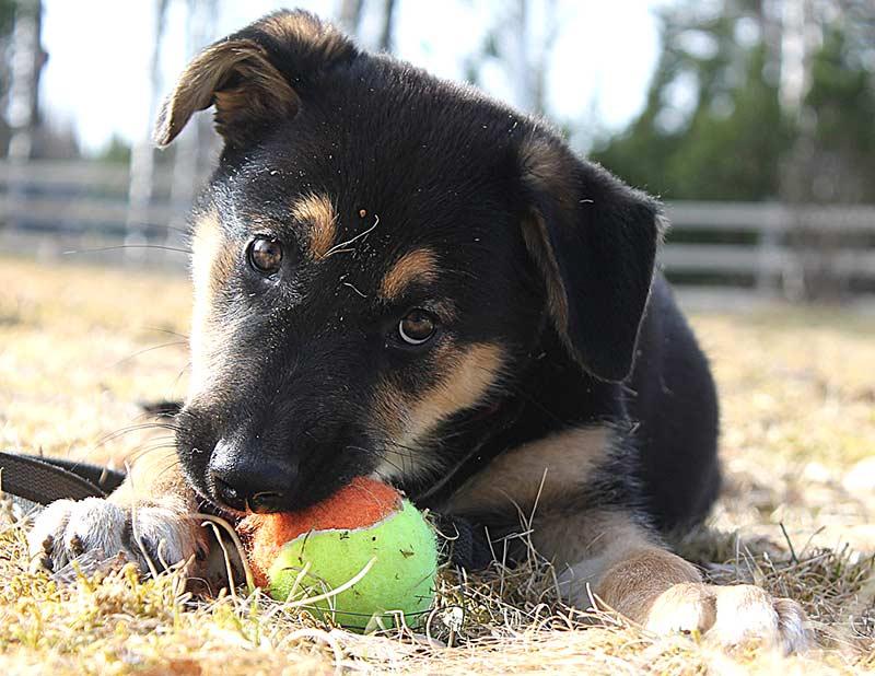 Impfungen sind die beste Gesundheitsvorsorge für Hund und Katze und damit aktiver Tierschutz