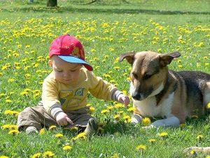 Kleinkind und Kumpel auf vier Pfoten (Foto: © Industrieverband Heimtierbedarf (IVH) e. V.)