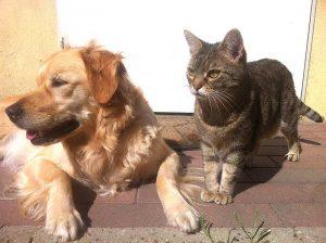 Die sogenannte Dermatophytose, gilt bei Hunden und Katzen als eine der häufigsten infektiösen Hautkrankheiten.