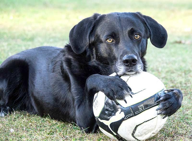 Das gemeinsame Spiel stärkt die Bindung zwischen Mensch und Hund.