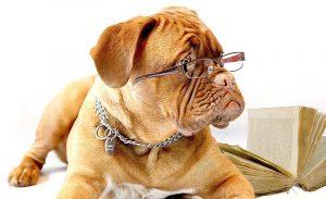 Urteil: Hund darf vorübergehend mit ins Büro