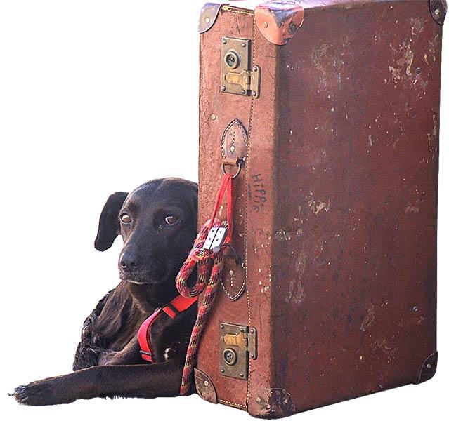 Wer mit seinem Hund auf Reisen gehen will, sollte gut vorbereitet sein