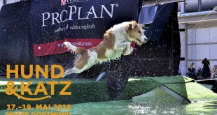 Messe Hund&Katz 2019 in Dortmund