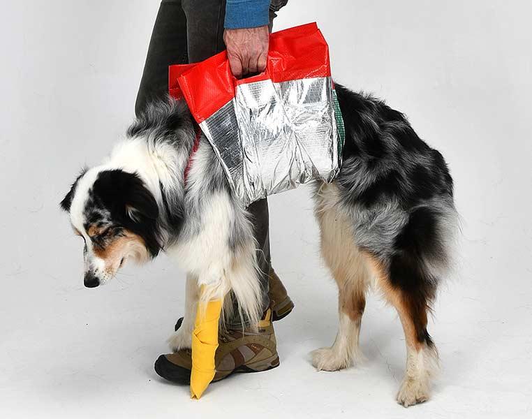 Rettungsdecke als Gehhilfe: Bei kleineren Verletzungen und zur Unterstützung eines in seiner Mobilität eingeschränkten Hundes kann die Rettungsdecke als Gehhilfe zum Einsatz kommen (Foto: Knauder's Best).