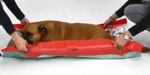 Rettungsdecke für Hunde: Einsetzbar für den Transport großer Hunde (Foto: Knauder's Best).