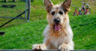 Racko – Ein Hund für alle Fälle