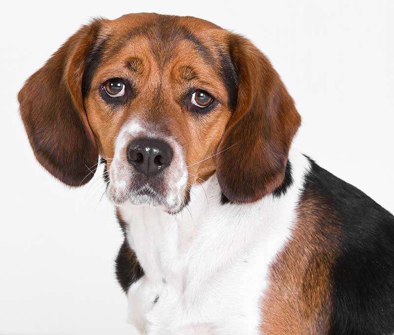 Verdacht auf illegale Tierversuche an Hunden in Erlangen