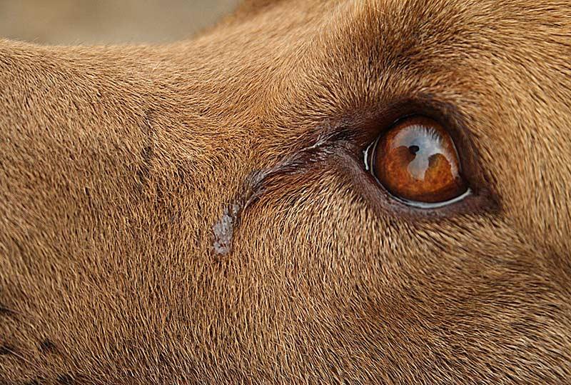 Gewalt an Tieren