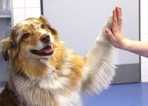 Gewichtsmanagement für Hund und Katze: Die Traumfigur ist Geschmacksache – Gesundheit nicht.