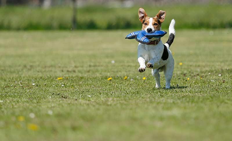 Hund beim Sport (Foto: Heel GmbH)