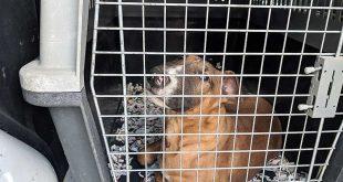 Stuttgart: Hundebaby aus Transporter beschlagnahmt