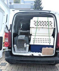 Hundebaby aus Transporter beschlagnahmt (Foto: © PETA Deutschland e.V.)