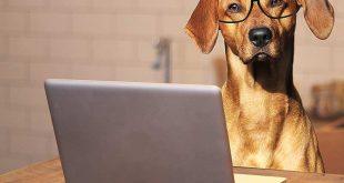 Computerspiele sollen Hundesenioren geistig fit halten - geistigen Abbau kann man mit gezieltem Training entgegenwirken
