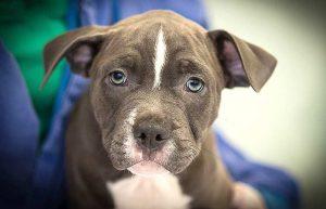 VIER PFOTEN fordert lückenlose Rückverfolgbarkeit aller Hunde (Foto: © VIER PFOTEN, Uschi Lang)