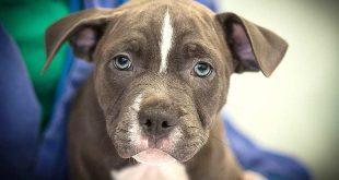 Skrupellose Tierärztin wegen grausamen Welpenhandels verurteilt