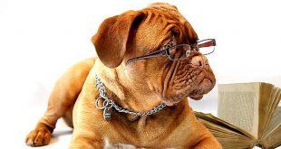 Ein Hund im Büro? Was früher unvorstellbar war, ist heute in vielen Unternehmen gang und gäbe (Foto: Wisdom Health – Mars Petcare)