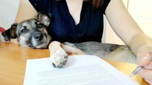 Bürohunde tragen zu einem entspannten Betriebsklima, gesünderen Mitarbeitern und einer hohen Motivation bei (Foto: TASSO.e.V.)