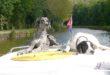 Hausbooturlaub - Freizeitkapitäne bringen ihre Hunde einfach mit an Bord (Foto: ©Locaboat Holidays)
