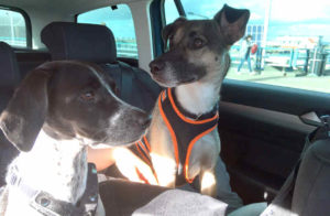 Auch im Urlaub mit dabei: Viele Hunde dürfen ihre Halter auf Reisen begleiten (Foto: © TASSO e.V.)
