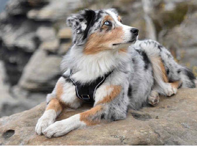 Auch Hunde lieben Ausflüge in die Berge, an die Küste oder ins Flachland – gibt es doch viel Neues zu entdecken!